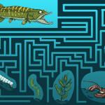 labyrinthe du brochet